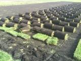 Укладка газонов Киев Украина 1